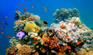 Coral_Reef_Dying
